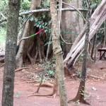 L'arbre qui abrite l'entité