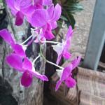 Les jolies fleurs de Parumjai