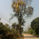 Un arbre immense et fleuri