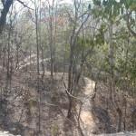 Chemin dans la forêt qui mène au Kouti