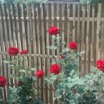 Entrée très fleurie