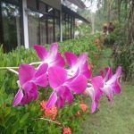 Fleurs à Ban Cheun Beach
