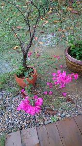 Le jardin inondé
