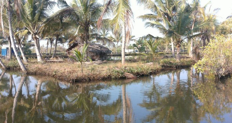 Ashtamudi Lake : les backwaters