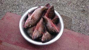 Belle pêche à MUNROE LAKE ISLAND RESORT