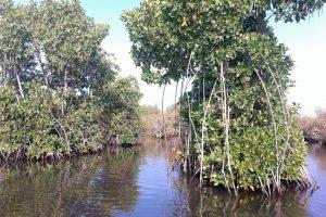 Promenade dans les backwaters